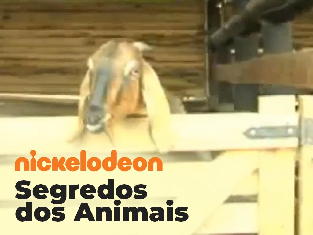 thumbnails-fernando_0000_char-nickelodeonBode v2